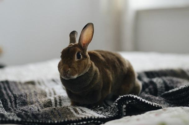 rabbit indoor