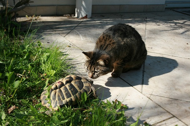 turtle and cat
